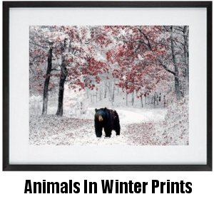 Animals In Winter Framed Prints