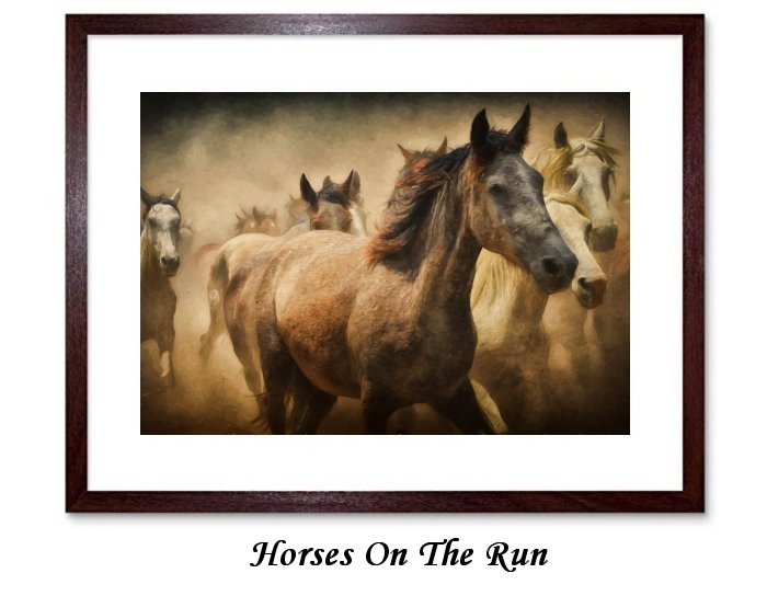 Horses On The Run