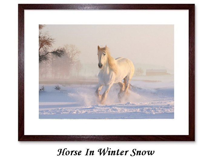 Horse In Winter Snow